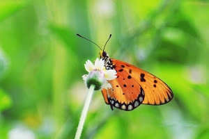 Butterfly_pxt by Ndi Nardi -  Click on the image to enlarge.