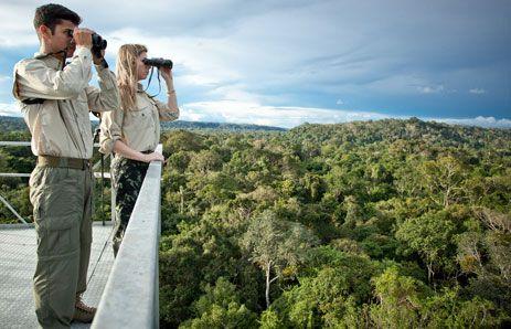 Cristalino Rainforest Lodge   Alta Floresta, Brazil   http://tourthetropics.com/south-america/amazon-rainforest/brazil/alta-floresta/tours/cristalino-lodge/
