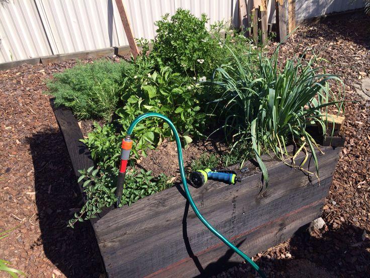 Herb patch. Self watering garden beds