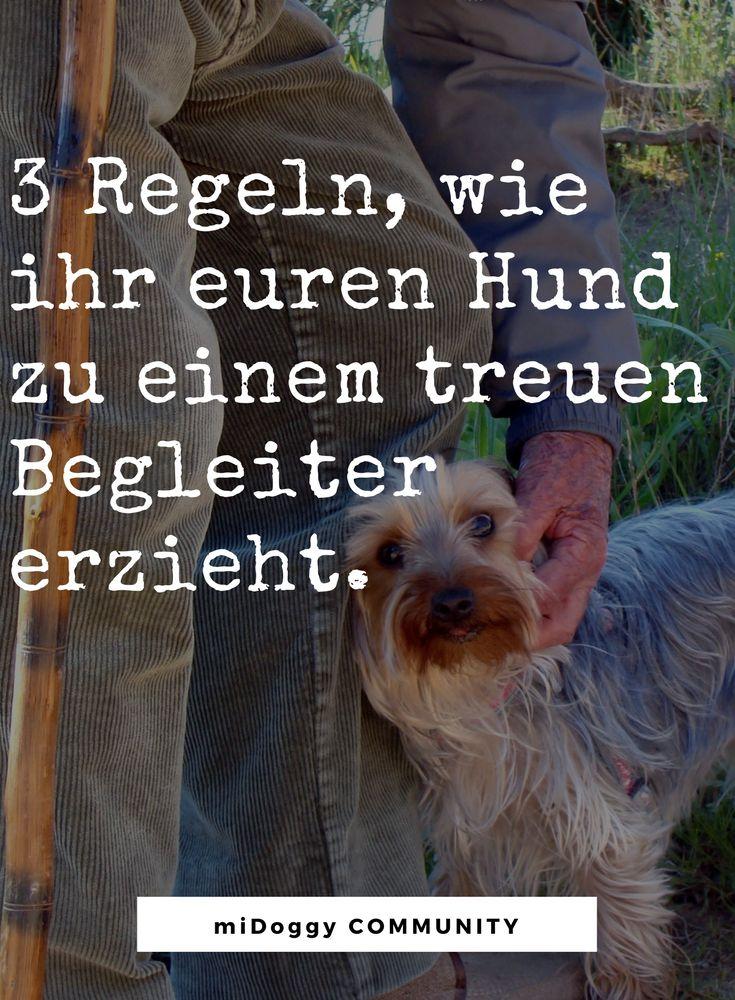 || #Hund || Ideen || #Hunde || Tipps || Tricks || Ideen || Liebe || Welpen || Bilder || #Hundeeziehung