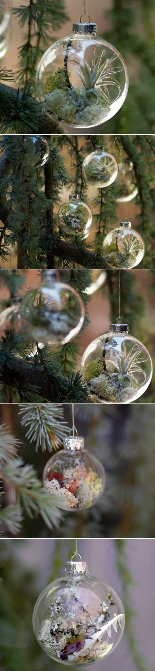 """DIY Ornaments with Living Plants ~ For a natural, """"woodsy"""" look! I'm dreaming of a fireside log cabin Christmas with gingham bows, popcorn and cranberry garlands, and these ornaments!"""