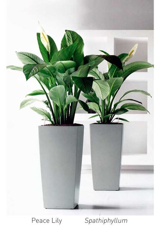 Glass Greenery Indoor Plant Hire Office Plants Plant