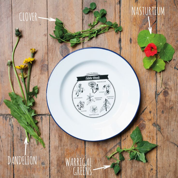 http://tmod.com.au/product/edible-weeds-enamel-plate