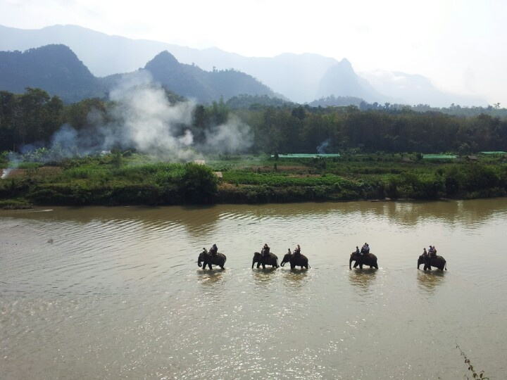 Laos. Luang Prabang. The Elephant Village