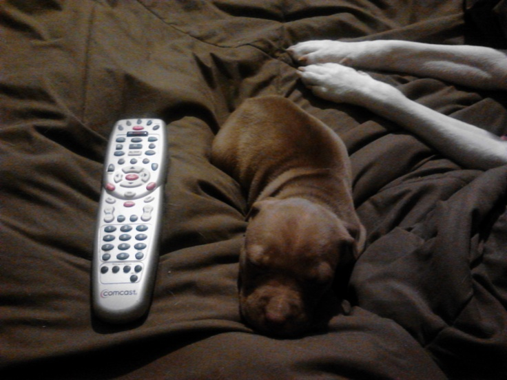 Brandy is the size of the remote!