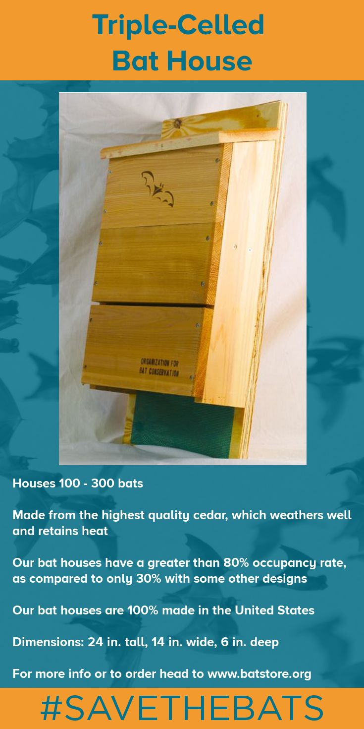 Invite a colony of up to 300 insect-eating bats into your yard with the OBC Triple-Celled Bat House. This bat house has been designed by bat researchers in order to promote occupancy rates. The interior chamber surfaces and long landing platform are fitted with polyethylene mesh to aid in maneuverability. #BatHouse #BatStore #Bats #Conservation #SAVETHEBATS