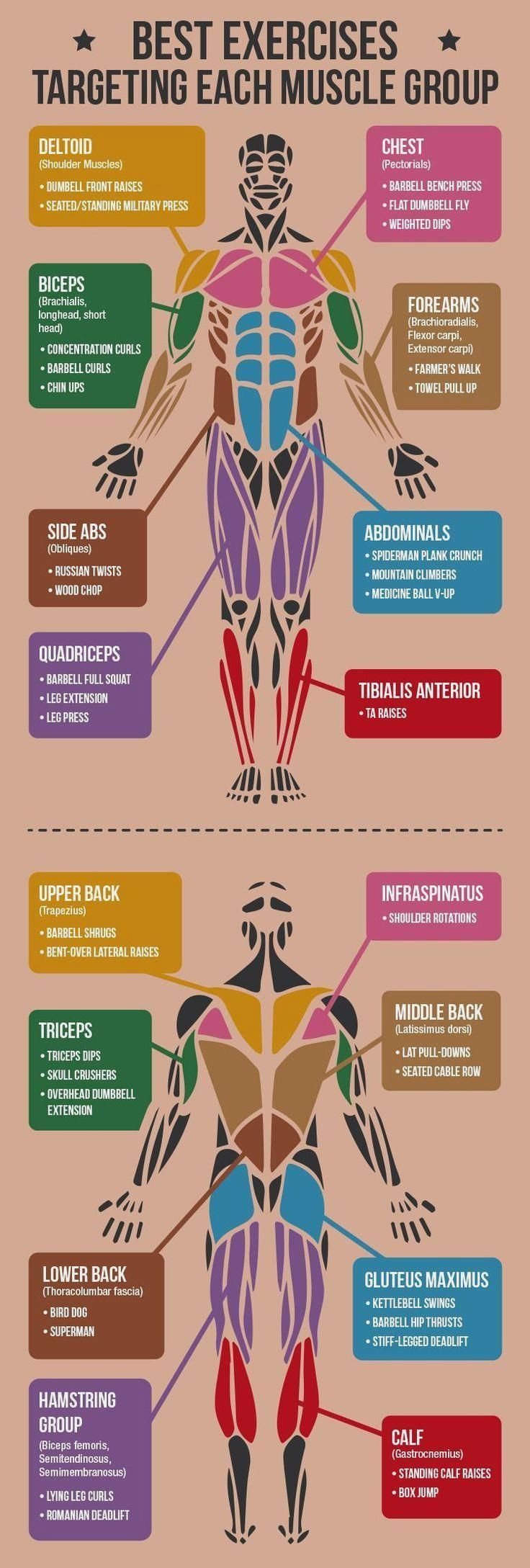 cool *CLICK FOR ALL EXERC *CLICK FOR ALL EXERCISES* Best Exercises Targeting Each Mu...