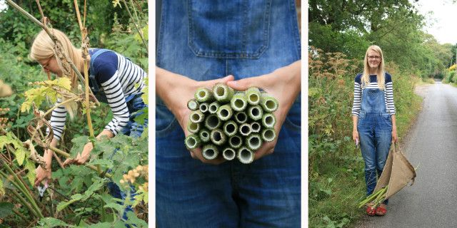 Foraging for common hogweed to make a bee hotel with!