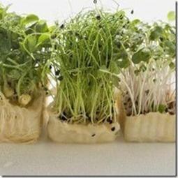 ¿Qué son los germinados? | Conciencia Eco