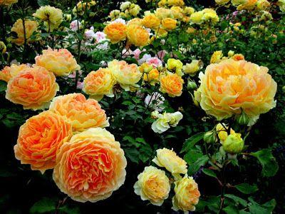 BANCO DE IMÁGENES: 12 fotos de flores preciosas en varios colores para compartir...