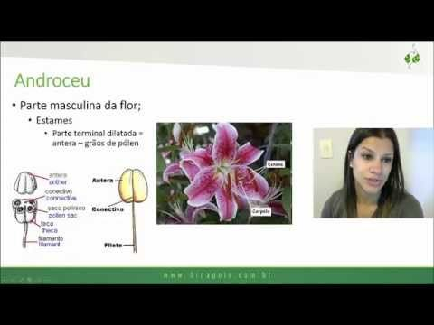 Módulo 21 (parte 2): Evolução e classificação das plantas - Gimnospermas e Angiospermas - YouTube