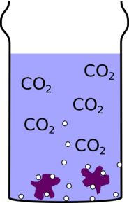 The fizzy drink has a lot of dissolved carbon-dioxide, which forms bubbles more easily on surfaces like the glass and the raisin. (c) Dave Ansell