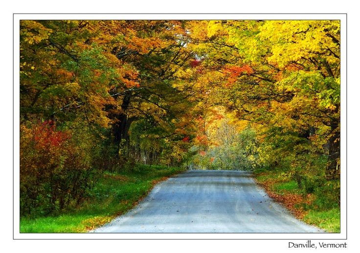 Fall trees in VT. I would love to go to the east to see the trees.: Favorite Place, Creative Idea