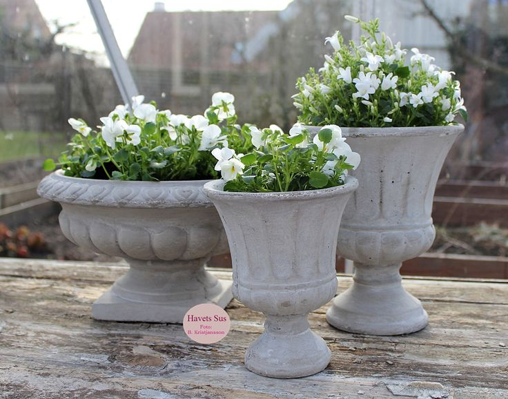 Blomster - flowers - whiteflowers - greenhouse - drivhus - Chic Antique - Havets Sus
