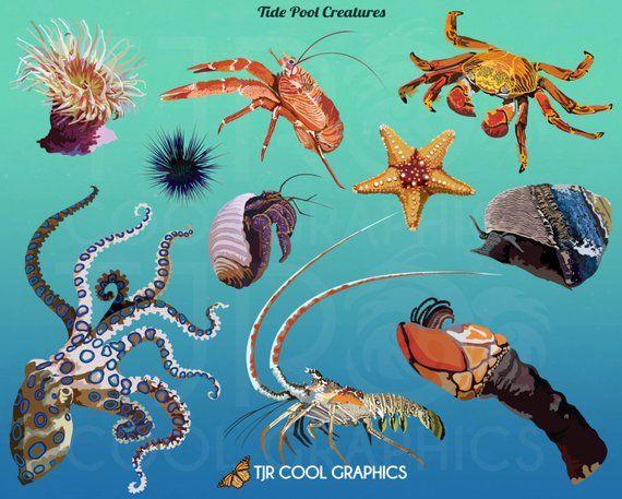 Ocean Animals Clip Art Octopus Clipart Svg Clipart Png Etsy Ocean Animals Digital Clip Art Clip Art
