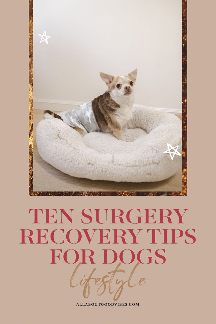 Ten Surgery Recovery Tips for Dogs with Hartz® in 2020
