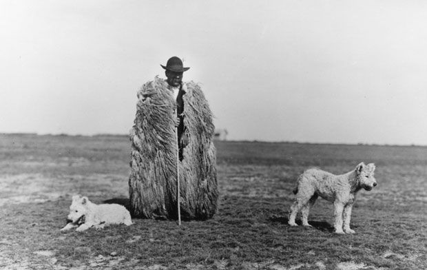 Rudolf Balogh's Shepherd with his Dogs, c. 1930