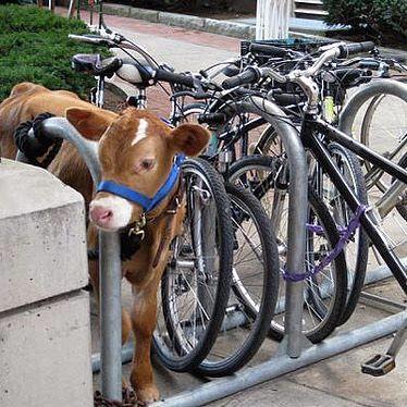 #innovation #bicycle #bike #park #parking #moo #cow #habal #هبل #HabaLdotCom #هبل_دوت_كوم