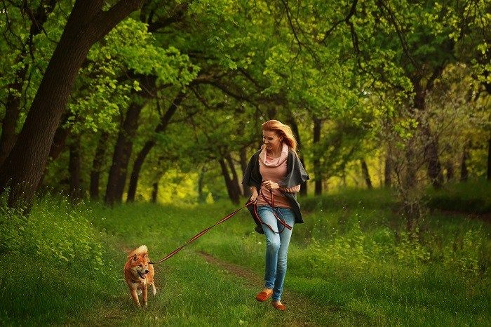 Can Uber for Dog Walkers help in your Busy Routine?