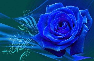 Существуют ли синие и голубые розы, где растут и сколько стоят