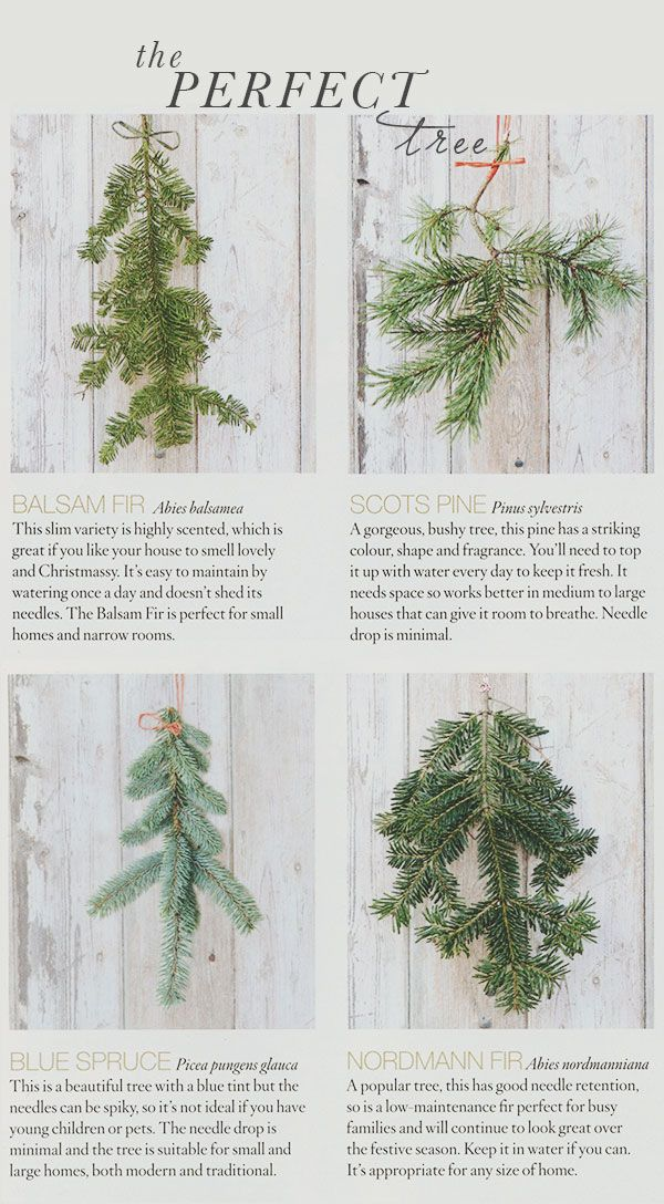 {holiday inspiration   finding the perfect christmas tree  other disasters}
