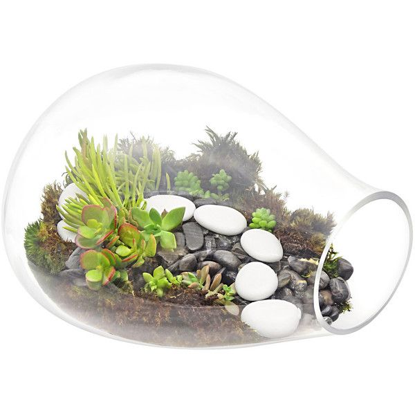 Succulent Stone Forest Terrarium - Contemporary - Terrariums - by... ❤ liked on Polyvore featuring home, home decor, contemporary home decor, succulent terrarium, contemporary home accessories, forest home decor and succulent plant terrarium