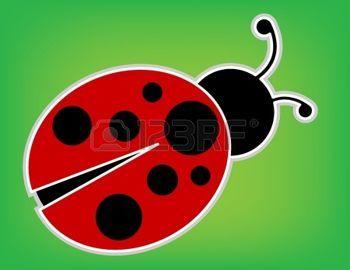 ladybird: Ladybug on green background