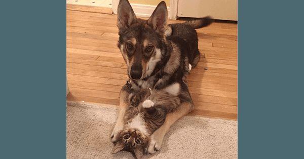 【9枚】保護シェルターで運命の出会い。愛犬が一目惚れした子ネコを引き取ると..|ペットフィルム -犬・猫・ペットの画像・動画まとめ petfilm.biz