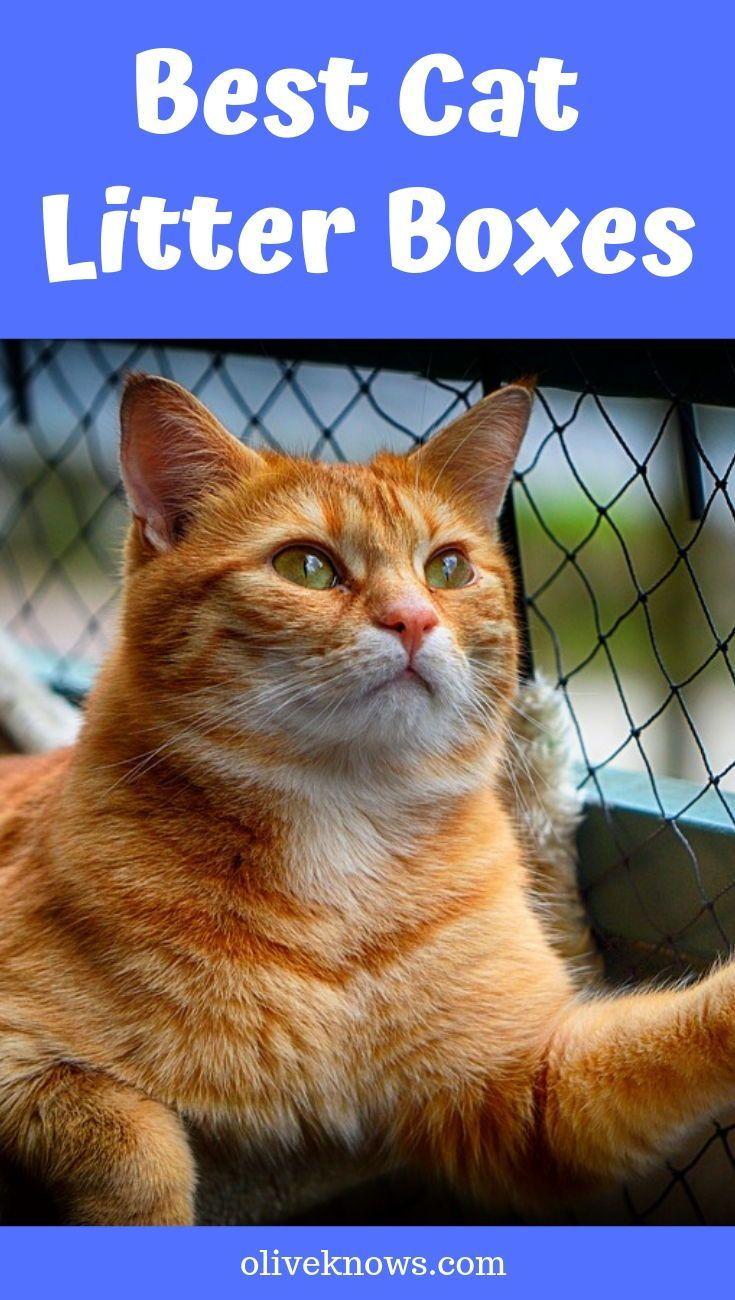 Best Cat Litter Boxes Oliveknows Best Cat Litter Litter Box Cool Cats
