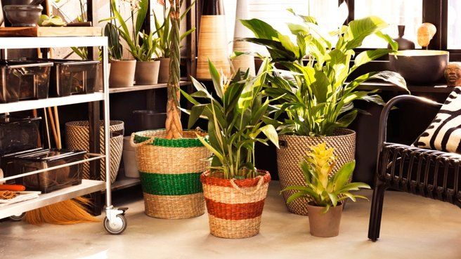 123 best vegetale images on pinterest jardinage plante for Plante interieur ikea