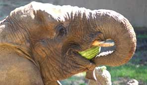 Wild Animals, Wildlife Conservation, Educational Programs, Bay Area CA | Oakland Zoo