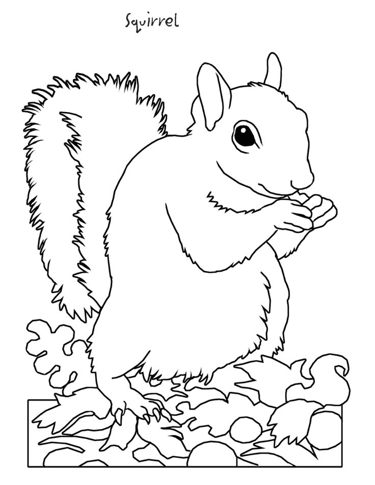 squirrel coloring page the