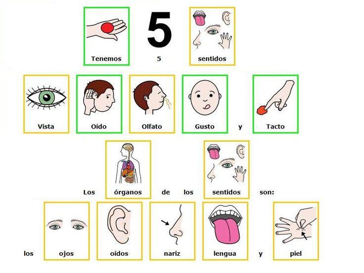 Los 5 sentidos pictogramas tea autismo pinterest search for Mural de los 5 sentidos