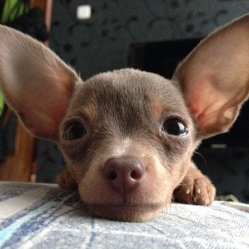 Big Ears To Hear You Better With I Also Have A Huge