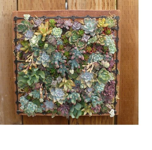 Delightful Wall Succulent Planter Is Made In The USA And Comes Filled With Green  Sphagnum Moss U0026