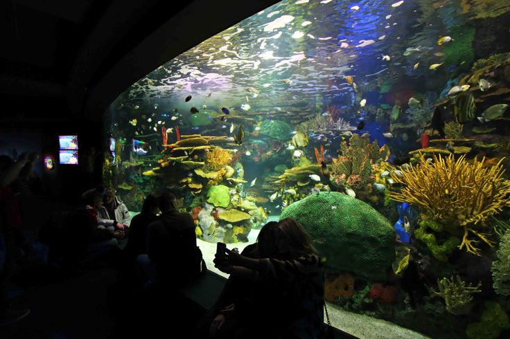 Rainbow Reef shows tropical waters of the Indo-Pacific region. RGB fixtures were used to brighten up and highlight the coloured coral and rocks. #LED #lighting