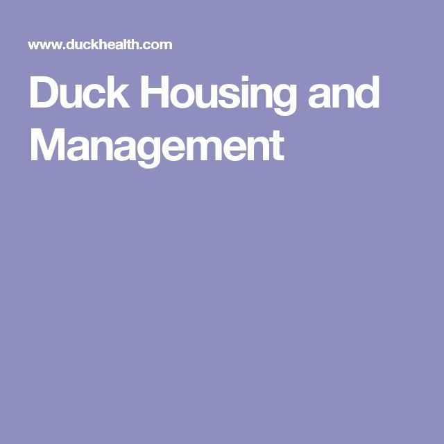 Duck Housing and Management