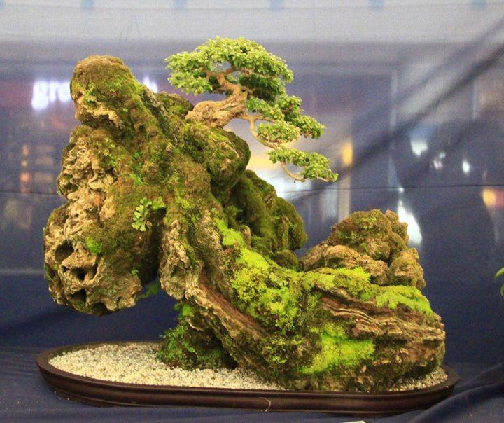 17 best images about bonsai trees bonsai sculptures zen for Zen garden trees