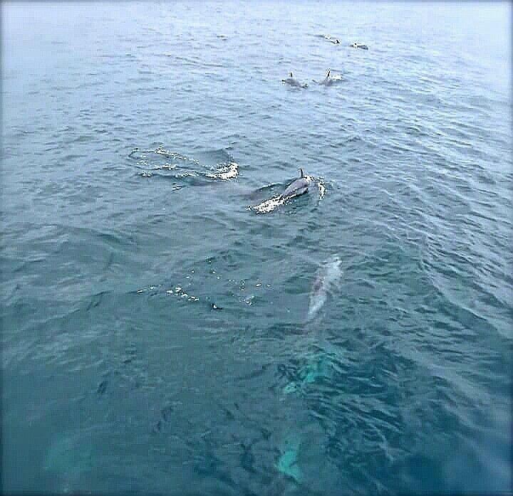 Delfines FOTOGRAFÍA MICB