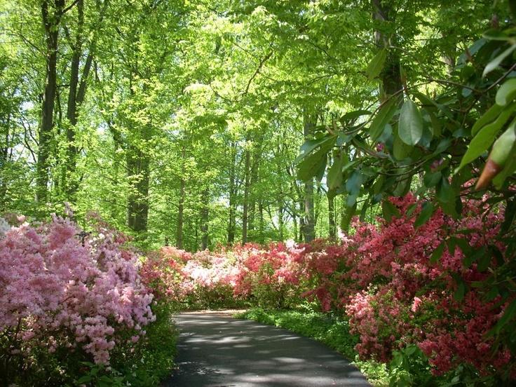 Quarry Shade Garden At Bon Air Park: 78 Best Images About Azaleas On Pinterest