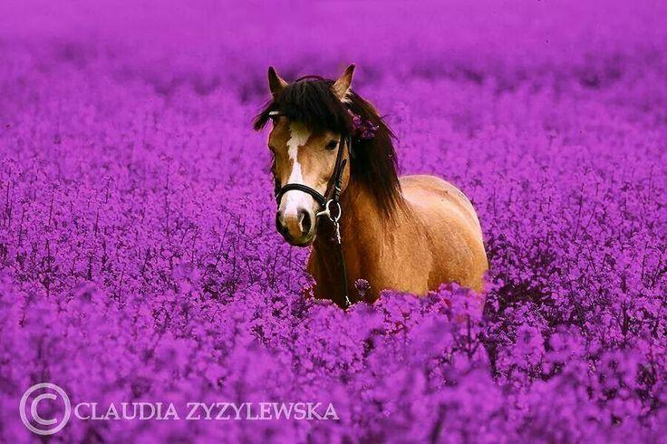 Pony in flowers.