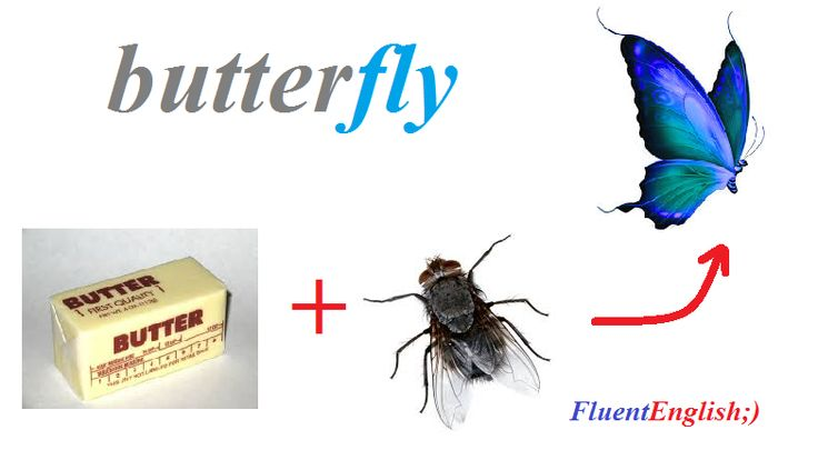 butter+fly=butterfly! (бабочка)