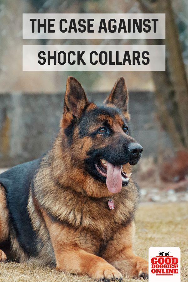 Best Dog Shock Collar To Train A Dog Dog Training Near Me Dogs