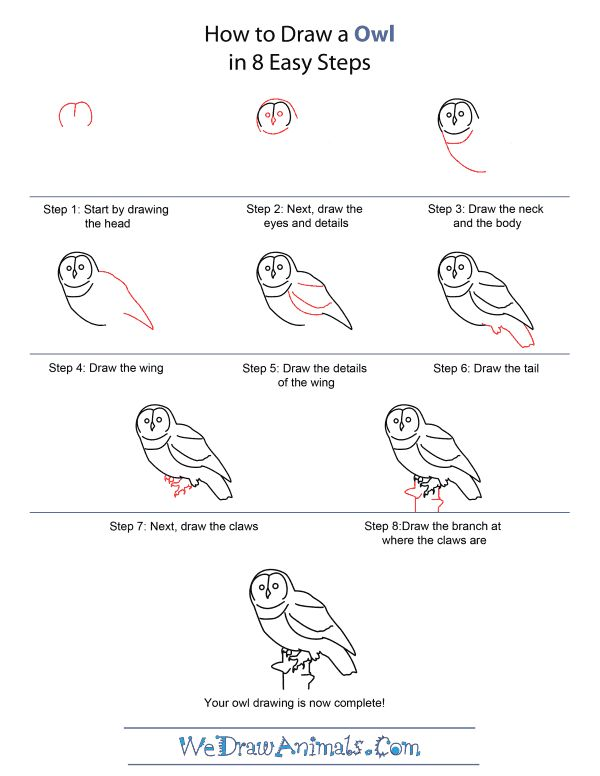 38 best images about how to draw an owl on pinterest for Draw an owl in two steps