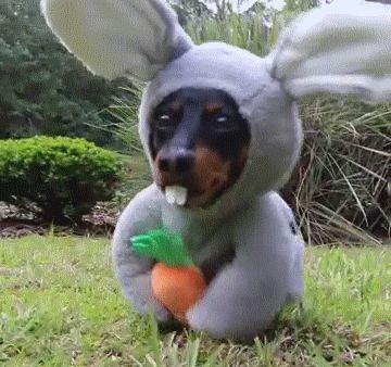 Rabbit Dog | Funny Cat GIFs