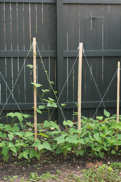 [Reminds me of Argyle sock pattern!--excited I have 3 little seedling pole beans poking up in the kitchen.] How to Build a Trellis for Growing Pole Beans #stepbystep