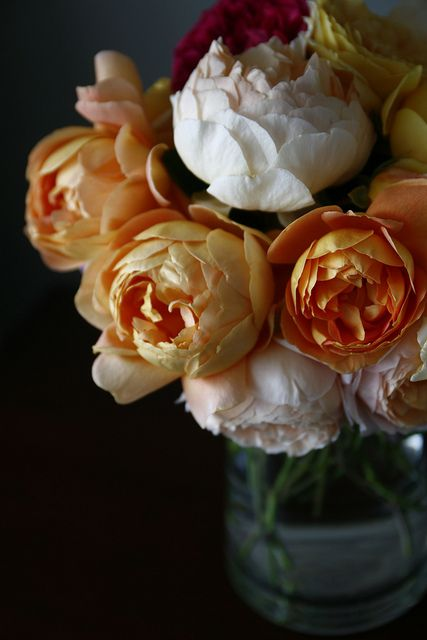 Jude the Obscure. A David Austin rose