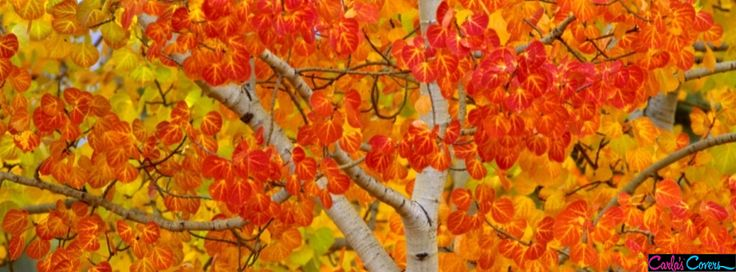 Fall Foilage Facebook Covers89 Facebook Covers