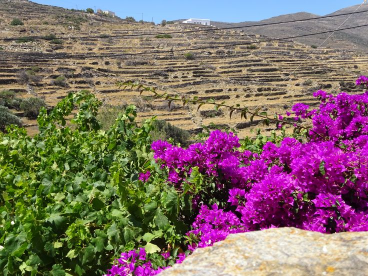 The countryside with vivid splashes of colour (Tinos)