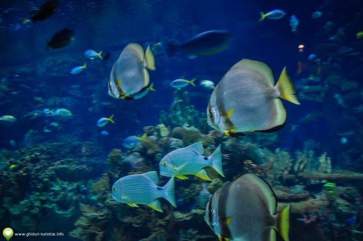 Poze de la Oceanograful din Valencia